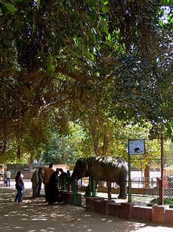 El Zoologico de Guiza en el Cairo