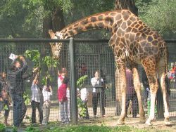 El Zoológico de Pekín