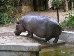 Bioparque - El Zoo de Roma