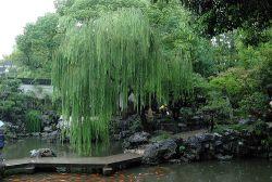Jardín Yuyuan de Shanghai
