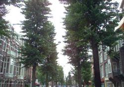 Barrios de Amsterdam