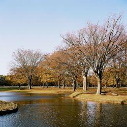 Parque Yoyogi en Tokio